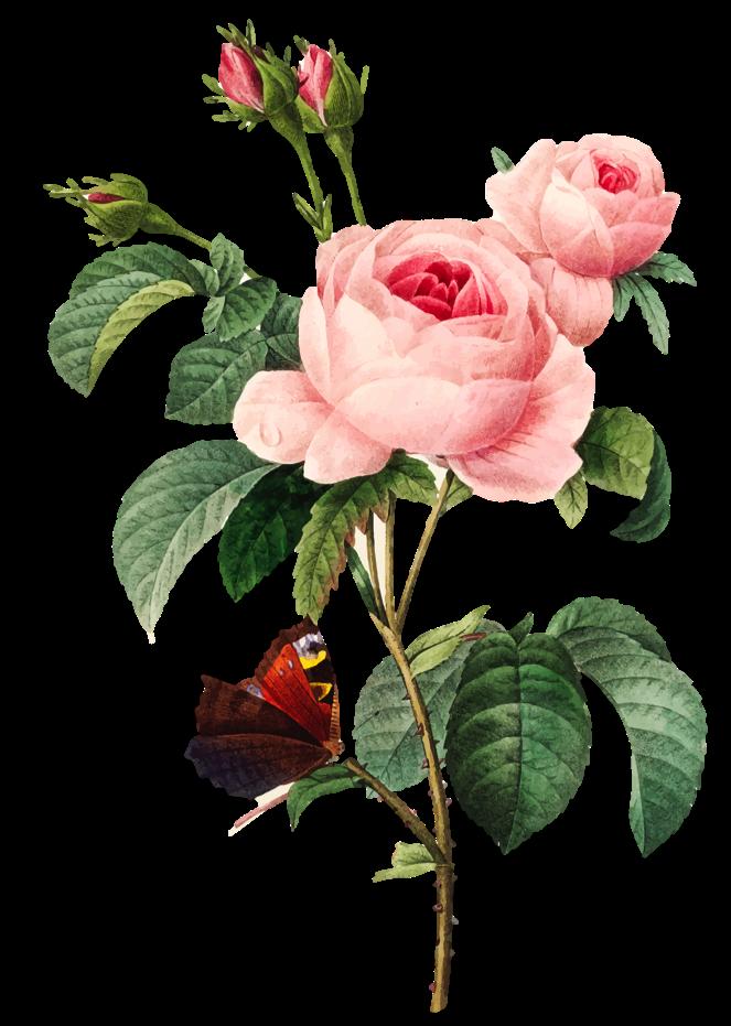 Amélioration des fleurs à identifier dans escape game lafeuillade